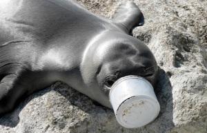 From Ocean Conservancy website