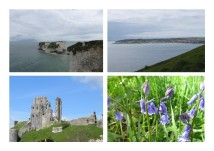 Old Harry, Swanage, Corfe Castle, Bluebells are everywhere