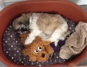 me-dog